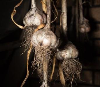 Testing Lights with Garlic